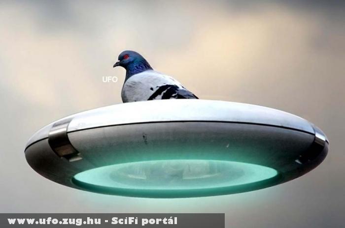 Ufo Bird
