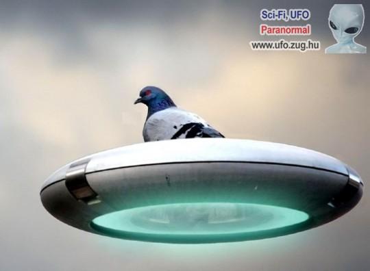 Repülő csészealjon szálló galamb