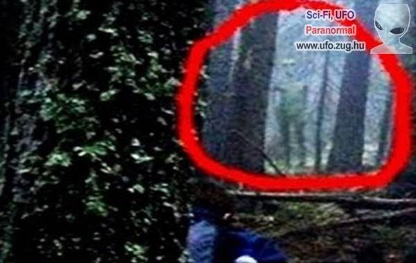 UFO-t fényképeztek egy bulgáriai erdőben