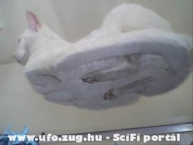 Csészealj macskából