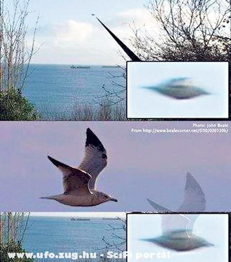 Ez csak egy madár!
