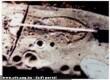 Cipõnyom egy több millió éves fosszíliában?!