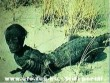 Krokodilember